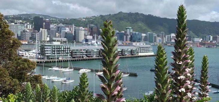 4rd SAAA CONFERENCE 2020, 20 NOVEMBER, ONLINE (WELLINGTON)